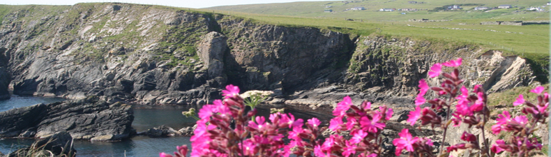 Campion on the cliffs